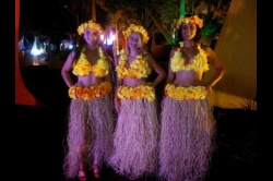 Baile do Hawaii 2014